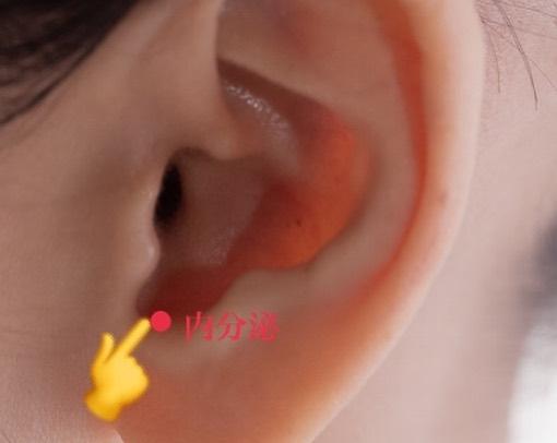 耳つぼMEI 内分泌ホルモン調整のつぼ
